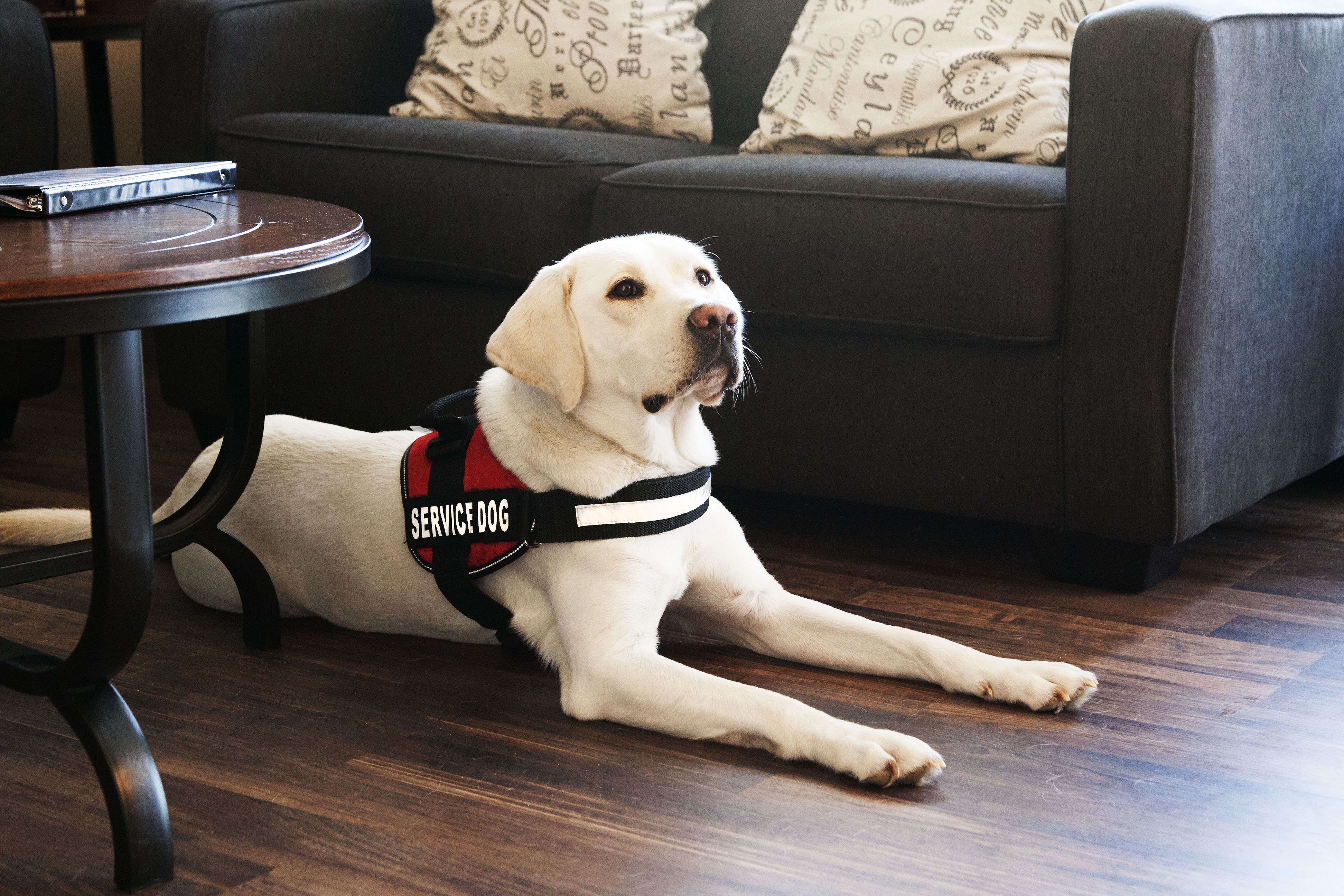 how-a-dog-can-improve-your-life-service-dog